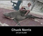 Chuck Norris prvi put na plaži