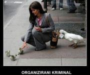Organizirani kriminal